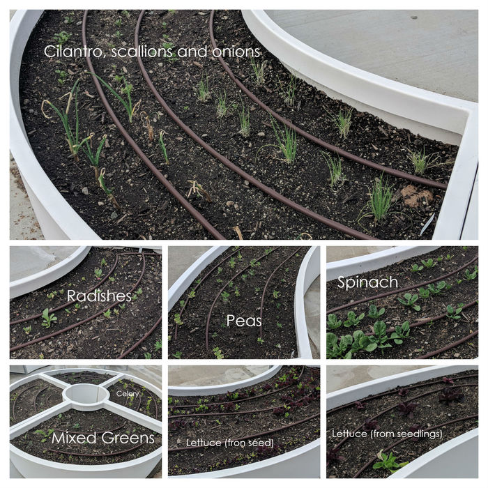 Photo showing Learning Garden plant growth