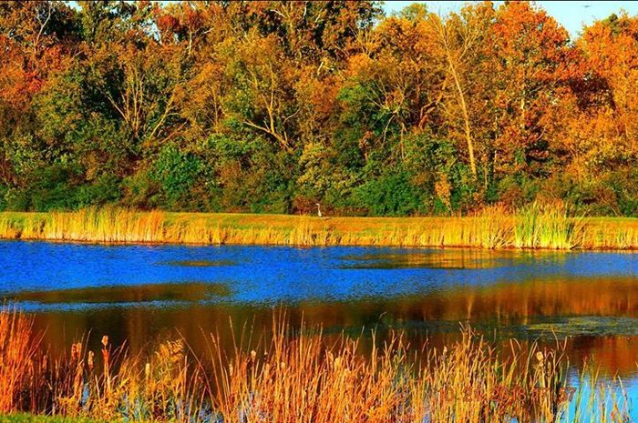 The gorgeous colors of Fall in Indiana, taken just east of Plainfield High School.