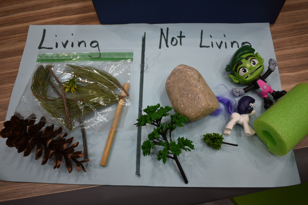 Kids activity living vs nonliving things