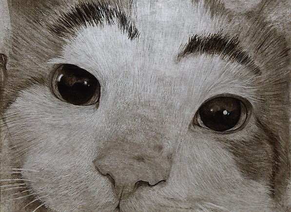 "Cover photo: Emma Cooper's pencil drawing, ""Eyebrow Cat,"" represents nearly a semester's worth of work."