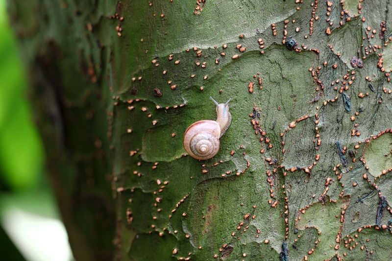 "Senior Grace Miller created this photograph, called ""Camouflage,"" when she spotted a tiny snail on the side of a tree."
