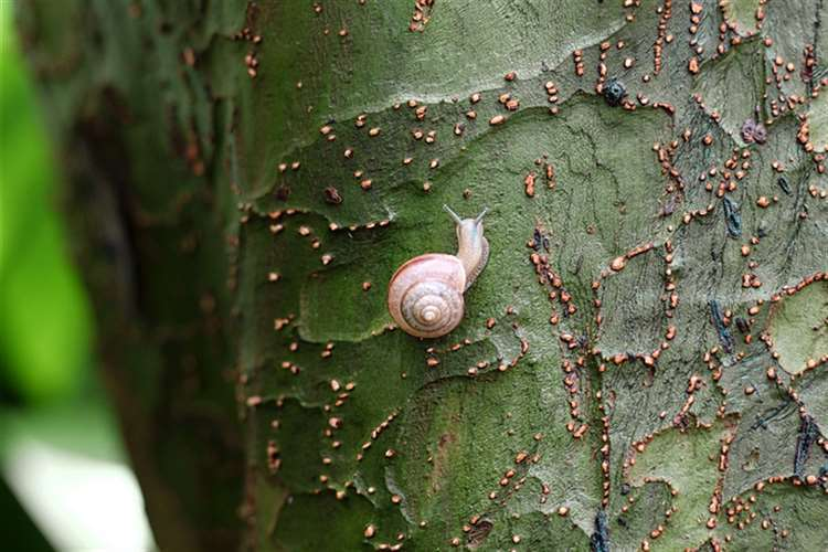 Grace Miller's Gold Key-winning entry is a photograph of a tiny snail on a tree trunk
